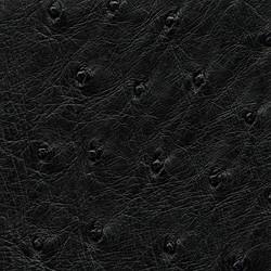 Ostrich - Black