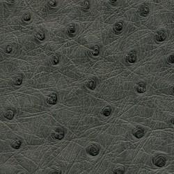 Ostrich - Dark Grey