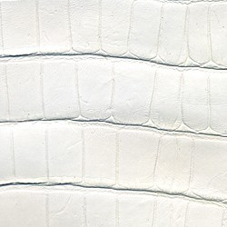 Alligator Mat - Blanc