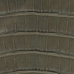 Alligator Mat - Gris Clair